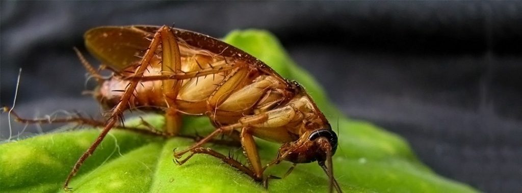 Pest control methods for home